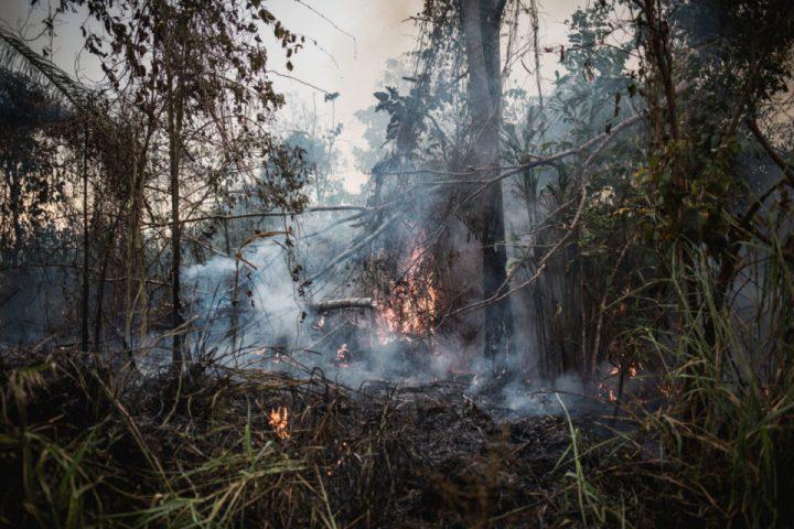 Amazonas. Así arde