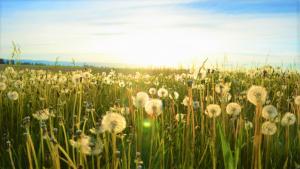 Frieden mit 100% Erneuerbaren Energien