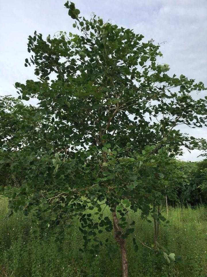 alberi06