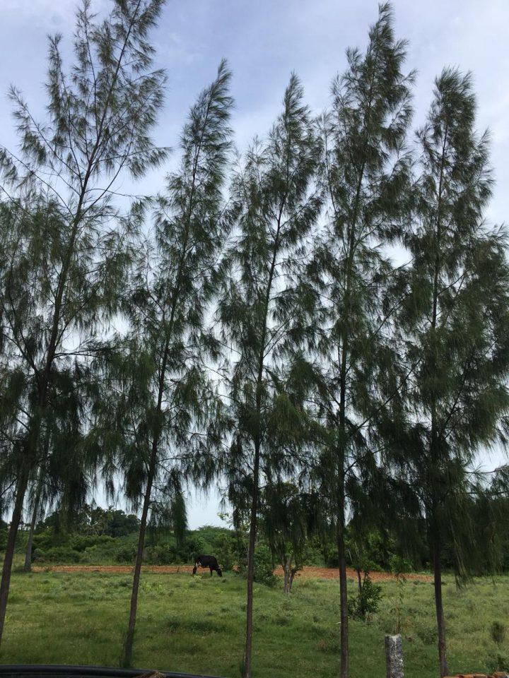 alberi07