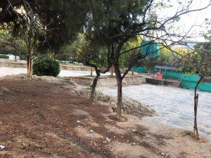 Las obras de remodelación de la Plaza de España están matando decenas de árboles adultos