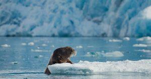 Arranca la reunión del IPCC en Mónaco: La crisis climática es una crisis para los océanos