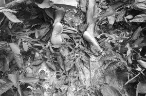 Amazonia Colombiana: asesinan a líder indígena del Pueblo Múrui Muina