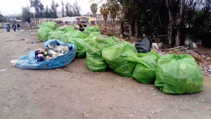 Quillota-Chile, ecologistas limpian orilla del río Aconcagua