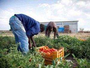 Regolarizzare i lavoratori stranieri, un bene per tutti