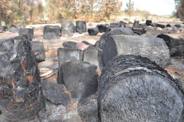 El planeta está ardiendo. Francia: comparando las superficies hay más incendios alrededor de la cuenca de Thau que en la Amazonía