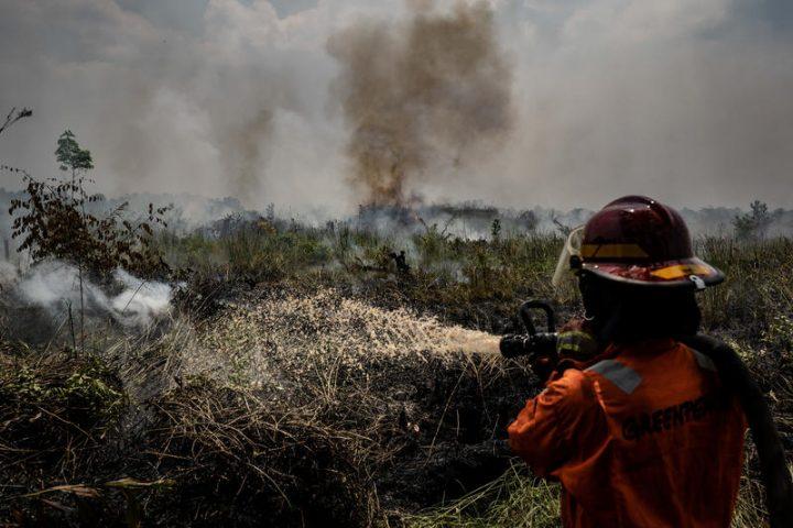 Greenpeace pubblica rapporto sugli incendi in Indonesia