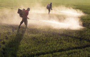 Em menos de um ano, governo Bolsonaro já liberou registros de 439 agrotóxicos