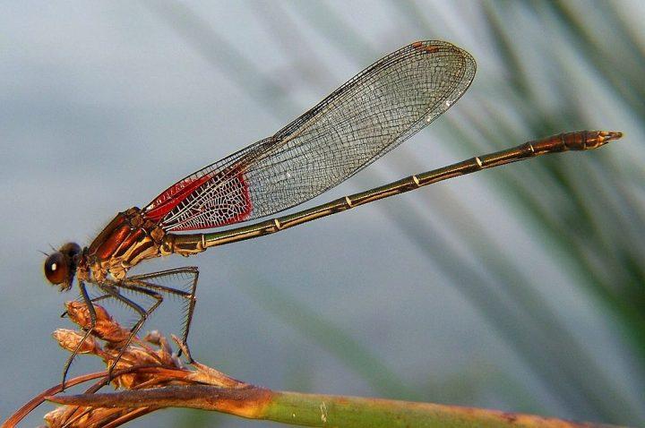 Nuestro mundo que se desvanece: Insectos
