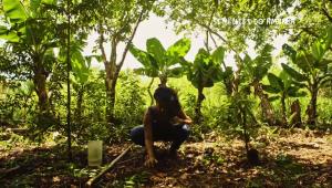 Todos os biomas brasileiros estão ameaçados, diz diretor de série sobre alimentos em risco de extinção