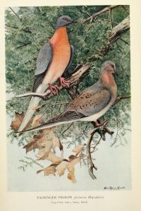 Nuestro mundo que se desvanece: Aves