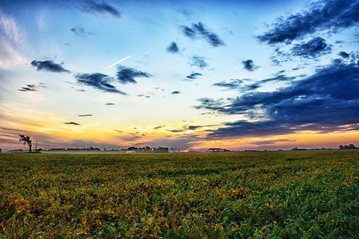 Mucha tierra en pocas manos: el agronegocio y sus consecuencias