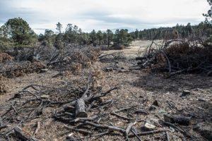 Desdén presupuestal, deforestación y defensores asesinados: las deudas ambientales de México en 2019