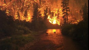 El cambio climático incendia Australia