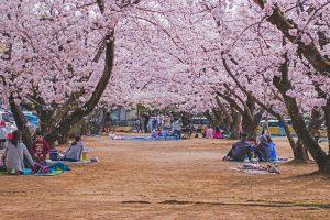 Απέχοντας από την παράδοση του hanami και τη δύναμη της αγκαλιάς