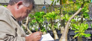 First Person: The 'inseparable bond' between Hawaiian culture and native plants