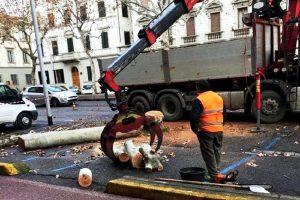 Italia Nostra: Fermate subito il taglio degli alberi a Firenze